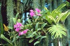 Epiphytes.
