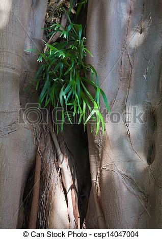 Stock Photography of epiphyte,.