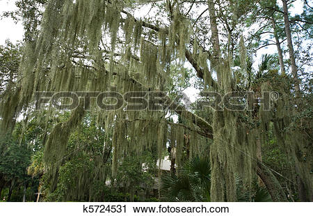 Epiphyte Stock Photo Images. 317 epiphyte royalty free images and.