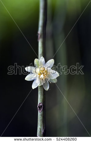 Epiphyte Stock Photos, Royalty.