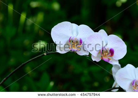 Epiphytes Stock Photos, Royalty.