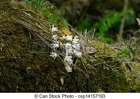 Stock Photographs of Epiphyte plant from vietnamese forest.