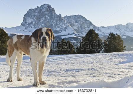 Alto Adige Stock Photos, Royalty.