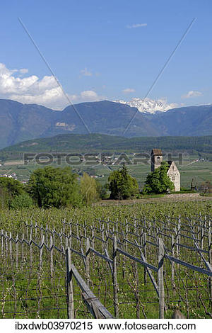 """Stock Image of """"Wine growing at the castle church of St. Sebastian."""