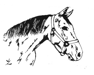 Equine Clipart by Kristen.