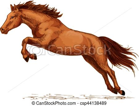 Vector of Landing or jumping horse at equine event sketch.