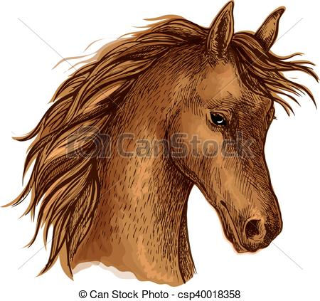 Clipart Vector of Brown arabian horse sketch for equine sport.