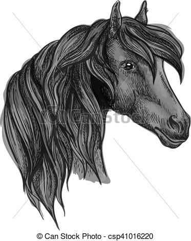 Vector Illustration of Arabian horse head sketch for equine sport.