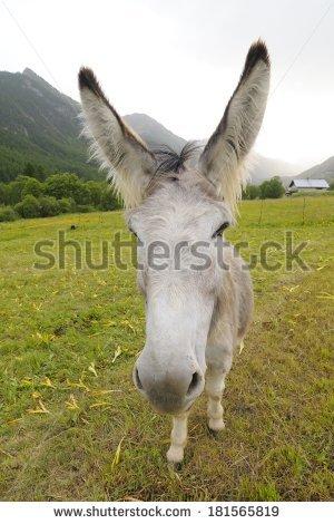 """equus Africanus Asinus"""" Stock Photos, Royalty."""