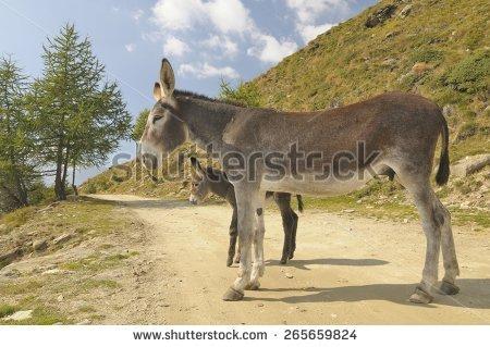 Funny Donkey Equus Africanus Asinus Stock Photo 86516959.