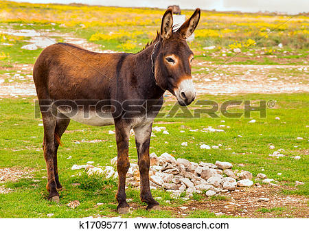 Stock Photography of Donkey Farm Animal brown color standing on.