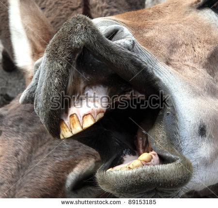 Horse Teeth Stock Photos, Royalty.