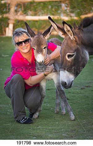 Pictures of Domestic Donkey (Equus asinus asinus). Christiane.