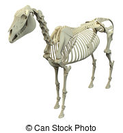 Equus Stock Illustrations. 317 Equus clip art images and royalty.