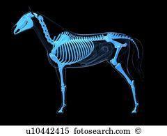 Equus Clip Art and Stock Illustrations. 175 equus EPS.