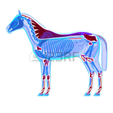 291 Equus Stock Vector Illustration And Royalty Free Equus Clipart.