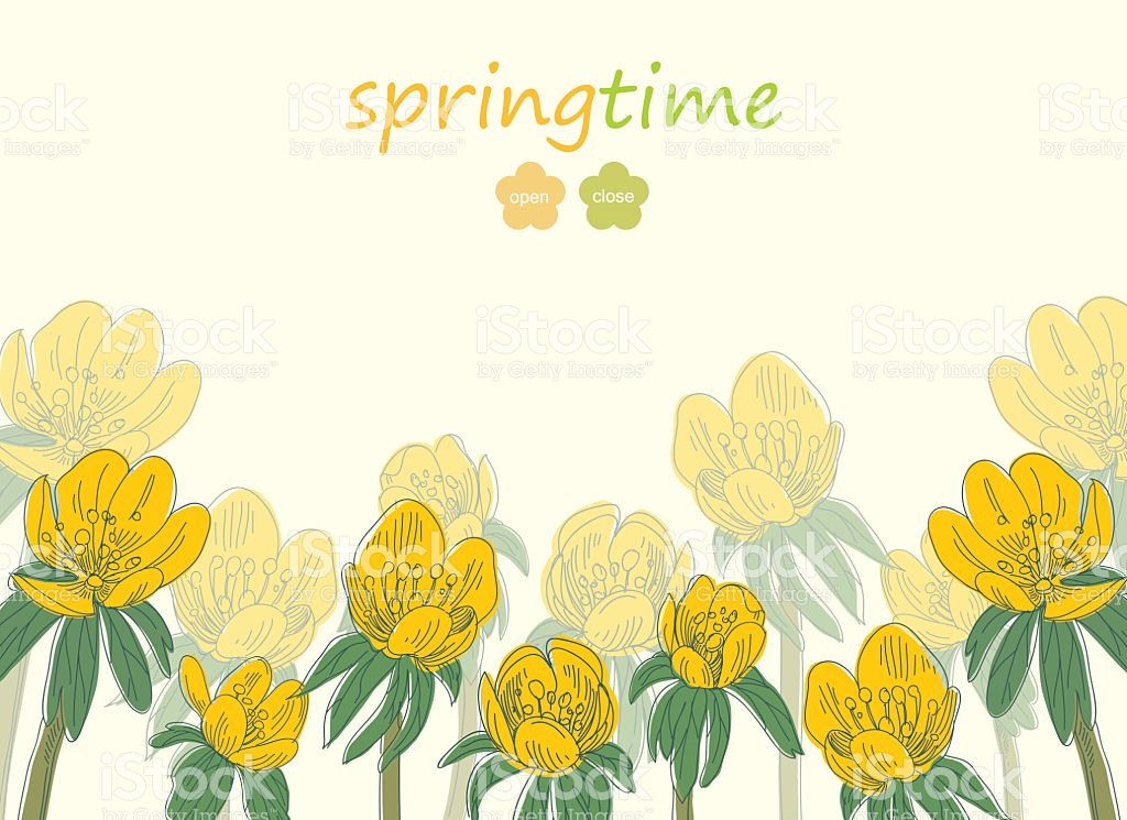 Eranthis Flowers Card Backgrounds Hand Drawn Vector Illustration.