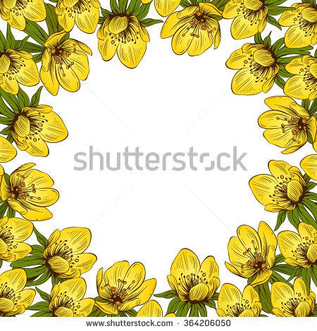 Eranthis Flowers Set Hand Drawn Vector Stock Vector 364206206.