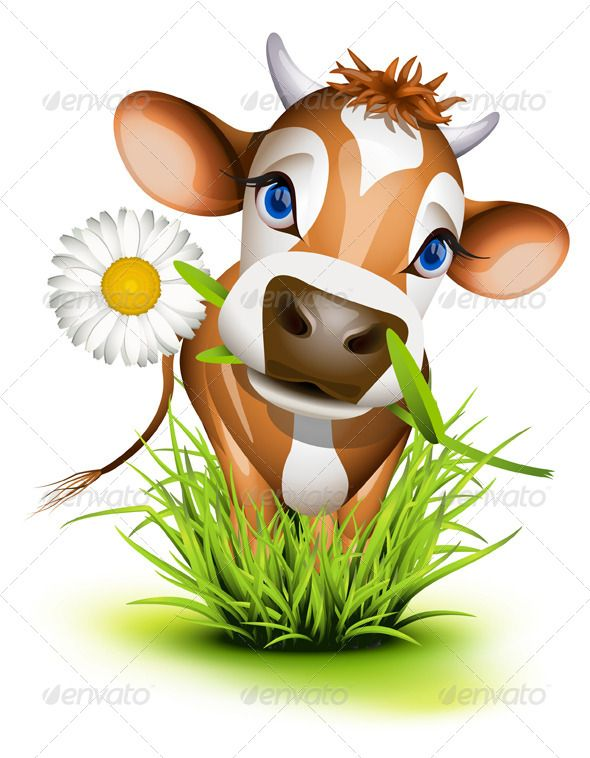1000+ images about Krowy, cows on Pinterest.