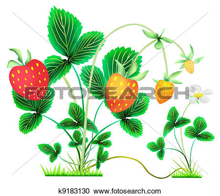 Stock Illustrations of strawberry bushes with berries and flower.