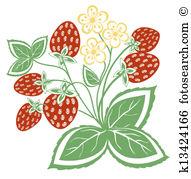 Erdbeerpflanze Clip Art Illustrationen. 2.789 erdbeerpflanze.