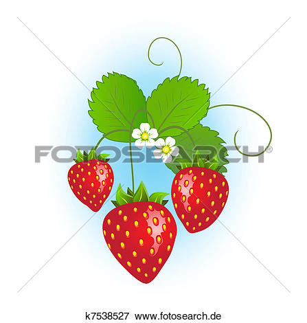 Erdbeerpflanze Illustrationen und Stock Kunst. 457 erdbeerpflanze.