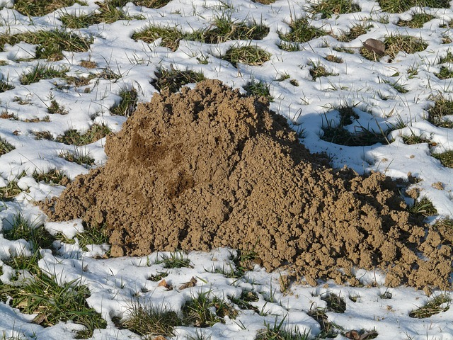 Free photo Mole Scoop Earth Erdhaufen Molehill Dig Hill.