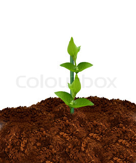 Heap of soil isolated on white background.