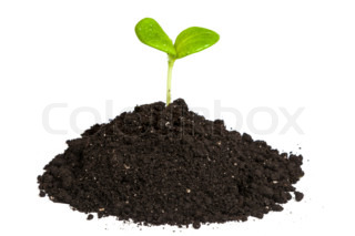 """Buy Stock Photo """"Trees growing in Pile Rice isolated""""."""