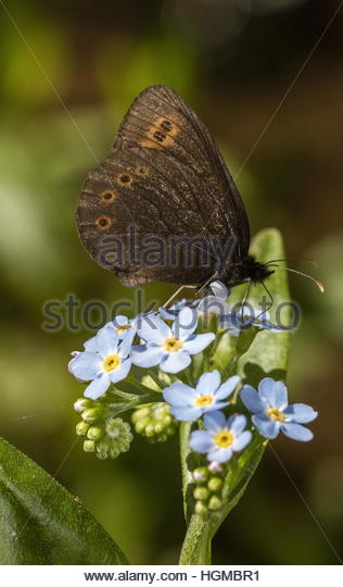 Butterfly Water Insect Stock Photos & Butterfly Water Insect Stock.