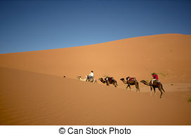 Pictures of Camels in the Erg Chebbi Desert, Morocco csp17441181.