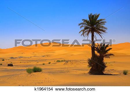 Stock Photo of palm tree on Sahara desert (Erg Chebbi, Morocco.