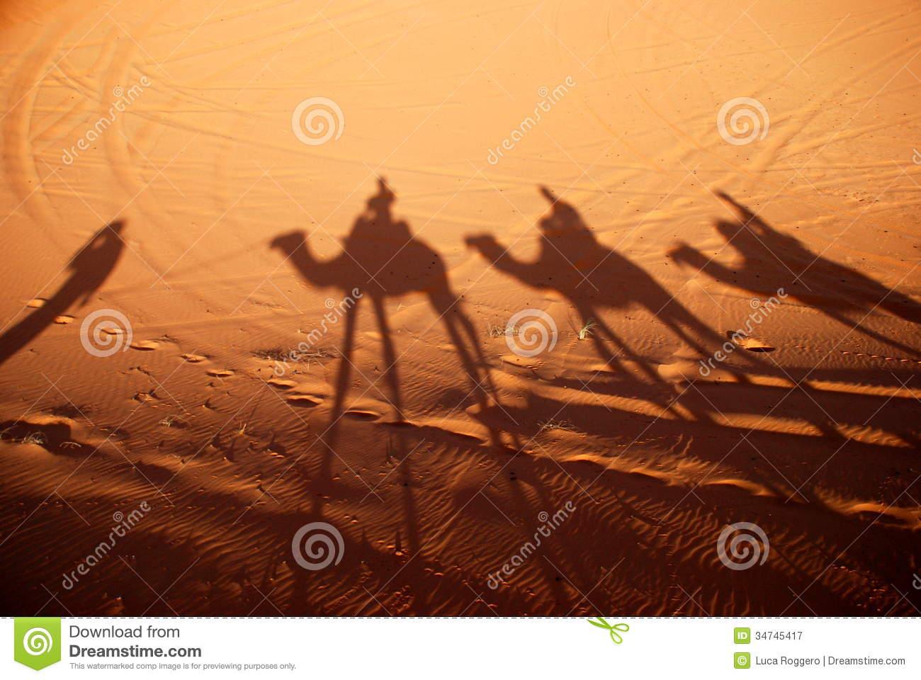 Dromedaries Shadows. Erg Chebbi, Sahara, Morocco Royalty Free.