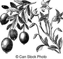 Ericaceae Vector Clipart EPS Images. 63 Ericaceae clip art vector.