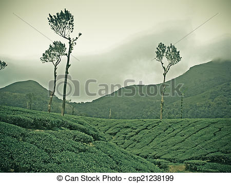 Stock Photographs of Tea estate. Scientific classification.