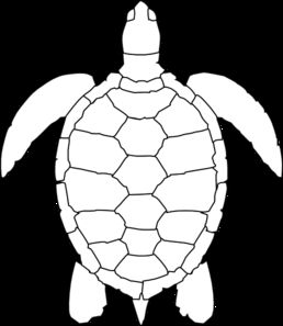 1000+ images about Sea Turtles on Pinterest.