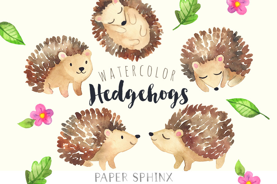 Hedgehog clipart.