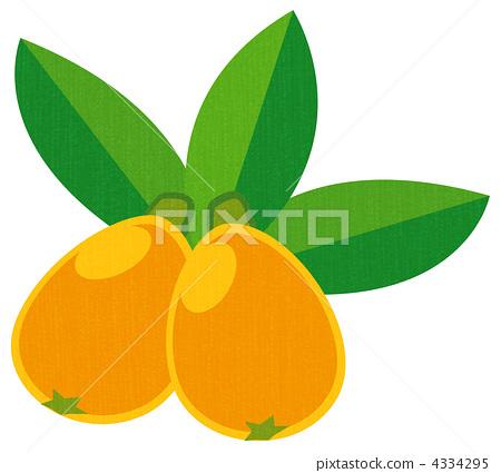 loquat, eriobotrya japonica, foods.