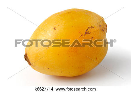 Stock Photo of Loquat Fruit.