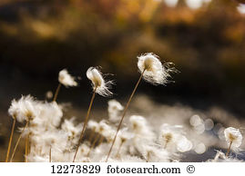 Tuft grass Stock Photo Images. 946 tuft grass royalty free.