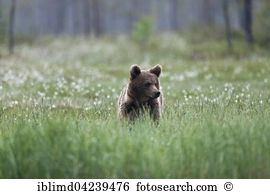 Taiga Stock Photos and Images. 5,628 taiga pictures and royalty.