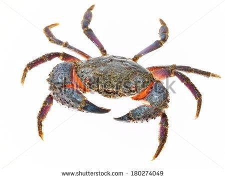 Hardshell Blue Crab Stock Photos, Royalty.