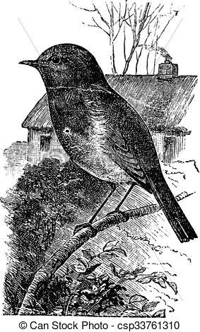 Vector Clip Art of European Robin or Erithacus rubecula vintage.