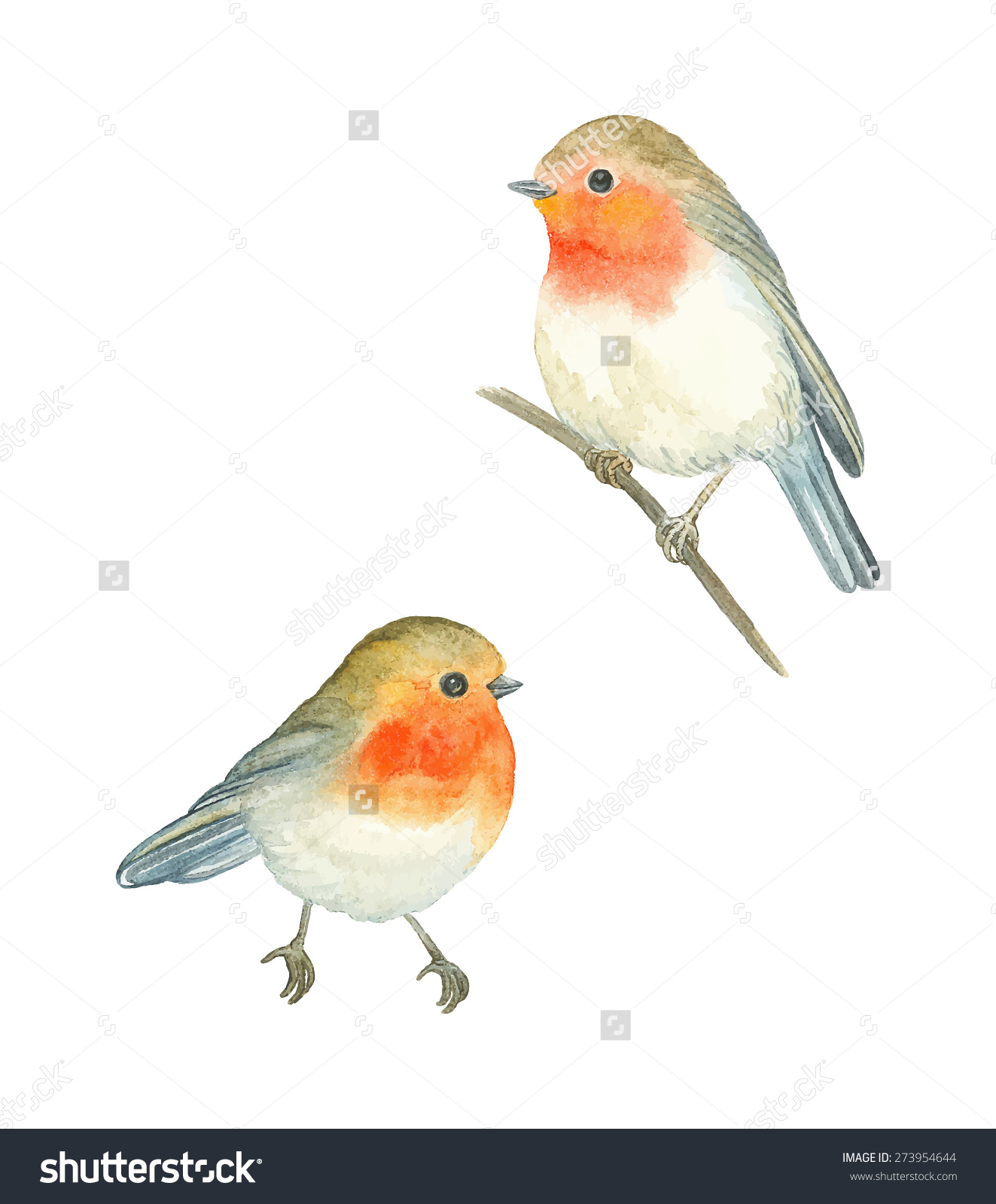 Watercolor Birds Robin Erithacus Rubecula Vector Stock Vector.