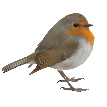 Red Robin Bird Drawing Clip Art, Vector Images & Illustrations.