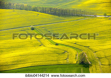 Stock Photo of Canola or rapeseed fields in Alt.