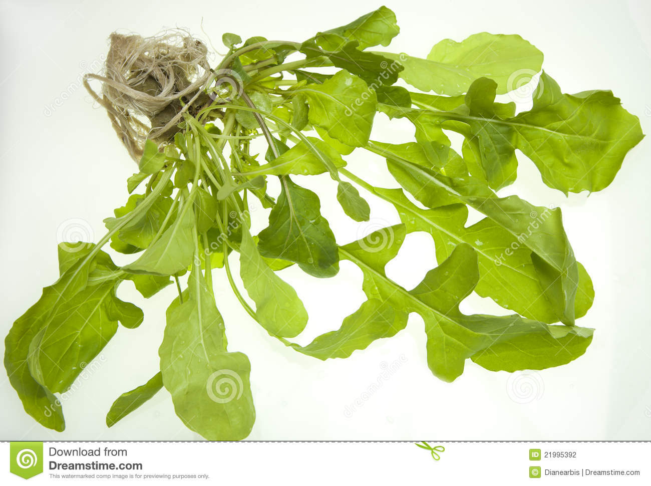 Arugula Plant (Eruca Sativa) Stock Photography.