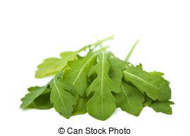 Picture of Eruca sativa rucola rocket salad.