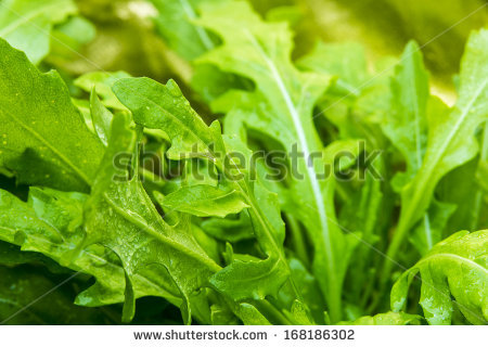 """rocket_leaves"""" Stock Photos, Royalty."""