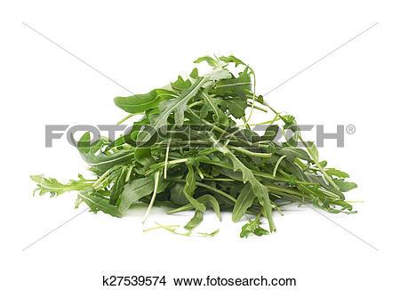 Stock Photo of Eruca sativa rucola rocket salad k27539574.
